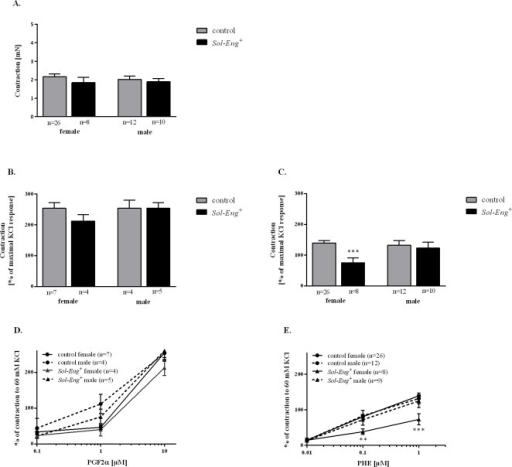 Impaired vascular contractility in female Sol-Eng+ mice as compared to control mice.Maximal contraction to KCl (30 mM) (A). Maximal contraction to PGF2α (10μM) (B) and to PHE (1 μM) (C) in Sol-Eng+ and control mice. Comparison of dose-response to PGF2α (D) and PHE (E) in Sol-Eng+ as compared to control mice. Data are shown as mean ± S.E.M. Unpaired t-test, **p≤0.01, ***p≤0.001.