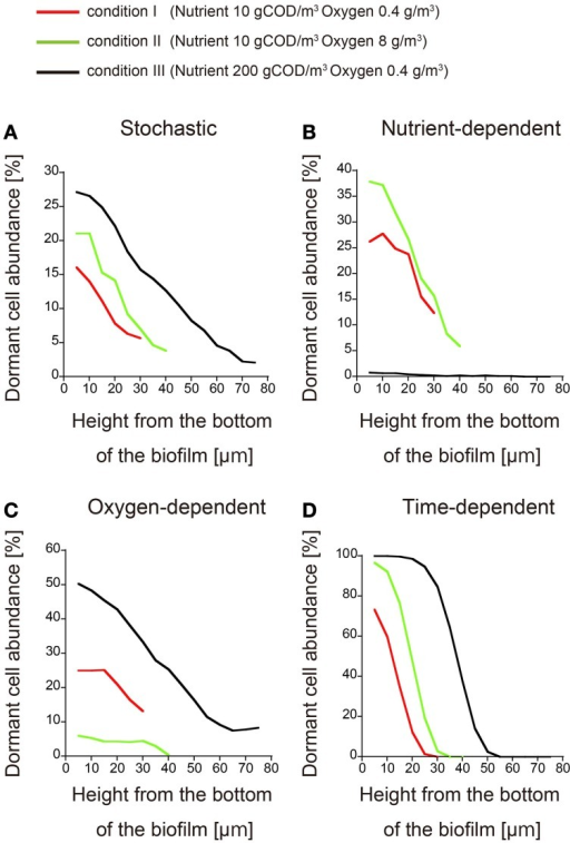Spatial distributions of dormant cells obtained for different nutrient and oxygen concentrations in the bulk. The abundances of dormant cells are plotted against the biofilm height under conditions I (red), II (green), and III (black) (the conditions are defined in the text). Dormancy was induced by (A) stochastic process, (B) nutrient-dependent process, (C) oxygen-dependent process, and (D) time-dependent process. Each plot was smoothed by moving-average with a 10 μm window (3 points).