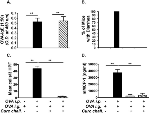 Exposure to curcumin during OVA-challenge alone suppresses allergic diarrhea, and mast cell expansion and activation.Mice were fed with OVA and treated with curcumin during OVA-challenge alone as depicted in Fig 1C. (A) Levels of serum OVA-IgE (1:50 dilution of serum was used for the assay); (B) Percent of mice with diarrhea; (C) CAE+ mast cells; (D) and serum mMCP-1 levels are shown. Data are representative of 3 independent experiments. * = p<0.05; ** = p<0.01.