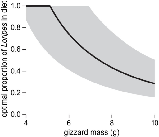 The predicted optimal proportion of Loripes in terms of dry shell mass in the diet of an energy intake maximizing red knot that has ad libitum access to both Loripes and Dosinia.Red knots with small gizzards are expected to feed exclusively on Loripes, whereas red knots with large gizzards are expected to have a large share of Dosinia in the diet. Grey area shows 95% prediction interval. See S4 File for more details.