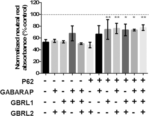 A minimal overexpression set contains P62 and members of the GABARAP subfamily.All pairwise and triple combinations of the overexpression set were tested for rescue of MPP+ toxicity. Cells were transfected with appropriate expression constructs, treated with MPP+ (100 μM) and neutral red uptake measured 36 h post-MPP+ treatment. Bars represent mean ± SEM (n = 3), one way ANOVA with Dunnett multiple comparison test to MPP+ control, *P ≤ 0.05, **P ≤ 0.01.