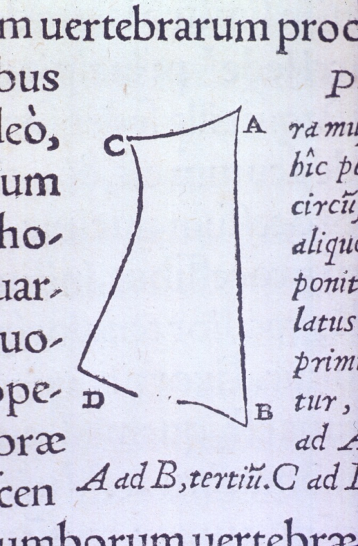 <p>Vignette showing an outline of the scalenus muscles.</p>