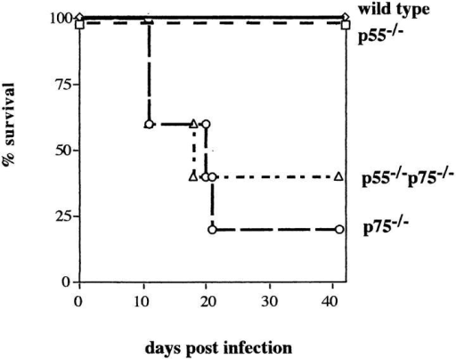 Survival of TNFR−/− mice infected with EV. Groups of five  male mice of various strains were infected with 5 × 103 PFU EV in a volume of 20 μl via the footpad. The strains of mice infected were C57BL/6  × 129 (wild-type control, ⋄; p55−/−, □; p75−/−, ○; and p55−/−p75−/−,  ▵). Similar observations were made in a duplicate experiment. Morbidity  is discussed in the text.