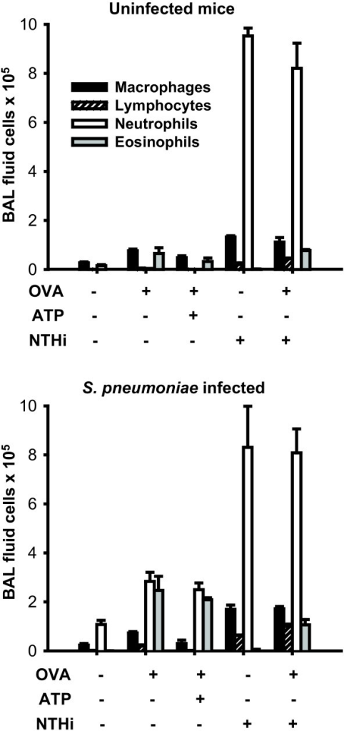 Leukocyte infiltration following various inflammatory stimuli. Differential cell counts were performed on bronchoalveolar lavage fluid from mice following treatment with different combinations of inflammatory stimuli without (upper panel) or with (lower panel) infection with S. pneumoniae (3.2 × 1010 CFU/ml) 18 h earlier. The experiments were performed simultaneously with identical treatments, except for the infectious challenge. (3 mice/group, mean ± SEM).