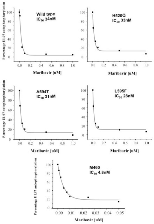IC50 of maribavir for the wild type and mutant UL97 Proteins. The wild type and mutant UL97 proteins were subjected to protein kinase assays with varying concentrations of maribavir (0.01-1.0 μM). The autoradiographs were analysed using the BioRad Multianalyst software and UL97 phosphorylation plotted as a percentage of the total phosphorylation in the absence of maribavir. An exponential decay curve was fitted and the IC50 of maribavir was determined for each of the proteins. The alteration of x-axis scale of the M460I graph should be noted. The IC50 for each species is shown.
