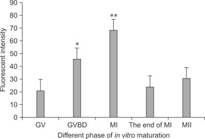 Comparison of Ca2+ fluorescence intensity in bovine oocytes during different phases of in vitro maturation. p < 0.05 (*) and p < 0.01 (**) indicate significant difference from other groups.