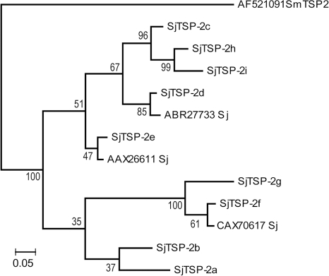 Phylogenetic analysis of Sj-TSP-2 clusters with homologues.Protein sequences corresponding to the LEL region of Sj-TSP-2 encoded by 9 clusters of Sj-TSP-2 cDNAs were aligned with additional homologues found by BLAST searches in GenBank and others reported by Cai et al [8]. Analysis was done as stated in the text. Clade credibility (posterior probability) values are shown at nodes. Protein sequence data reported in this paper are available in the GenBank, EMBL and DDBJ databases under the accession numbers ABR27733, AAX26611 and CAX70617.