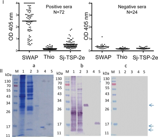 Recognition of recombinant Sj-TSP-2e by human sera.I: ELISA IgG screen of 72 sera collected from positive schistosomiasis japonica patients and 24 normal human sera (negative controls) probed by protein preparation from S. japonicum adult worms (SWAP), recombinant tag protein thioredoxin (Thio) and Sj-TSP-2e. II. Panel a: SDS-PAGE of soluble and insoluble protein extracted from adult S. japonicum and recombinant Sj-TSP-2e. Panels b and c: Western blot analysis with pooled sera randomly selected from confirmed schistosomiasis japonica patients (n = 15) and pooled sera from negative control subjects (n = 15) from northern China. Lane M, protein markers; lanes 1 and lane 2, soluble and insoluble proteins from adult S. japonicum; lane 3, Sj-TSP-2e (arrowed); lane 4, thioredoxin tag (Thi) (arrowed); lane 5, Sj-TSP-2e expressed in Pichia yeast (arrowed).
