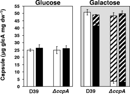 Amount of capsule polysaccharide in D39 and its isogenic ccpA mutant.Estimation of capsule was performed based on the determination of its glucuronic acid content in strains D39 and D39ΔccpA in mid-exponential (white bars, OD600 of 0.35±0.02) and transition-to-stationary (black bars, OD600 of 1.3±0.1) cultures grown in CDM containing 56±1 mM Glc (white background) or 57±1 mM Gal (light grey background). Hatched bars indicate loose capsule polysaccharide. All the determinations were done twice in two independent cultures and the values are means ± SD.