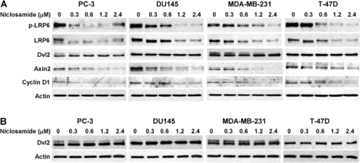 Effects of wnt 3a and wnt 5a on proliferation of hek293 cell