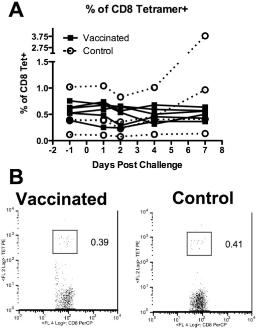 Frequency of tetramer positive cells is similar between vaccinated and control volunteers.Data shows percentage of CD8 cells within a CD8 gate with vaccinated as closed squares and control open circles. B) Representative FACS profile of one vaccinated and one control donor at day −1, one day before challenge with influenza virus.