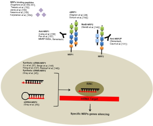 Biotechnological tools developped to target NRPs. Preclinical studies demonstrated the potential interest of several strategies to inhibit oncogenic functions induced by NRPs including: small interfering RNA, peptides, soluble NRPs antagonists, monoclonal antibodies (RISC: «RNA-Induced Silencing Complex»).