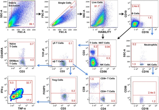 Flow cytometric characterization of B cells, T cells, NK cells, NKT cells, and neutrophils in a representative sample of psoriatic adipose tissue. After exclusion of debris, doublets, and non-viable cells, CD16-CD19+ B cells, CD3+CD56- T cells, CD3-CD16-CD56Hi NK cells, CD3+CD56+ NKT cells, and total CD16+ cells were identified. CD16+ cells were divided into neutrophils (CD16+SSCHi) and NK cells (CD16+CD56LoSSCLo) based on SSC properties. CD3+ T cells were further gated into naïve and effector and/or memory (eff/mem) αβ T cell subsets, CD4+CD8- T cells, CD4-CD8+ T cells, γδ T cells, and T regulatory (FoxP3+) cells. All cell populations are presented as percentages of viable cells except for granzyme B, IFN-γ, and TNF-α expressing cells, which are reported as percentages of the parent population. Positive gating for each fluorochrome parameter was established using FMO controls.