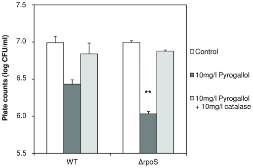 Impact of RpoS on stress sensitivity of V. anguillarum.Survival of V. anguillarum wild type (WT) and rpoS deletion mutant (ΔrpoS) after 6 h incubation in sea water, with or without pyrogallol (10 mg l−1), and with or without catalase (10 mg l−1). Survival was determined by plate counting on LB20 agar. Error bars represent the standard error of three independent experiments. ** denotes a significant difference in survival of ΔrpoS when compared to WT (independent samples t-test; P<0.01).