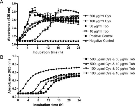 Post-Antimicrobial effect (PAE) of cysteamine, tobramycin and combinations thereof. The impact of cysteamine or tobramycin (A) and combinations thereof (B) on the recovery of growth of P. aeruginosa PAO1 cells that had been exposed to either/both of these antimicrobial agents for 16 h was monitored for 24 h post termination of cysteamine or/and tobramycin treatment at 37°C in a BioTek Synergy HT microplate reader.