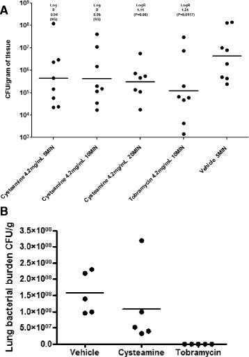 Antimicrobial activity of cysteamine following nebulisation (A) and intra-tracheal dosing (B) in a mouse acute lung infection model. (A) The clinical strain P. aeruginosa EUPPA103 was administered at ~6.5 × 104 CFU/mouse by intranasal injection under temporary inhaled anesthesia. Mice were placed within sealed nebulisation chamber and exposed to cysteamine at 4.2 mg/ml for 5, 10 or 20 minutes (total 1 dose) or tobramycin at 4.2 mg/ml in aqueous solution for 10 minutes via aerosol delivery system 1 hour post-infection. Experimental endpoint was lung tissue burden 25 h post-infection. Vehicle was sterile physiological water. The lower limit of detection was approximately 50 cfu/g of tissue. (B) The clinical strain P. aeruginosa ATCC27853 was administered at 3 × 104 - 1 × 105 cfu/40 μl/mouse by intranasal injection under temporary inhaled anesthesia. Mice were given two doses (5 mg/kg each) of cysteamine or tobramycin delivered intratracheally 10 min and 6 h after infection. Experimental endpoint was lung tissue burden 26 h post-infection. Vehicle was sterile physiological water. The lower limit of detection was approximately 50 cfu/g of tissue.