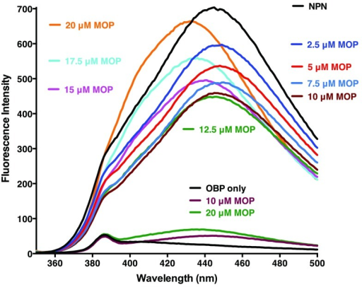 Binding of MOP to AaegOBP1.Following addition of NPN, fluorescence emission spectra were recorded with increasing doses of MOP. Note the decrease in fluorescence intensity (quenching) as the doses increases up to 10 µM and an increase in fluorescence and blue shift at higher doses. In a separate experiment, included in the lower part of the figure for comparison, fluorescence emission spectra were recorded with AgamOBP1 alone and after addition of MOP, but in the absence of NPN.