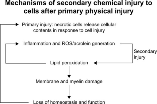 Progression of primary injury and secondary injury. After primary injury, the biochemical cascade that follows is secondary injury. The secondary injury can cause damage to tissue that was previously unharmed, perpetuating a cycle of oxidative stress and injury.Abbreviation: ROS, reactive oxygen species.