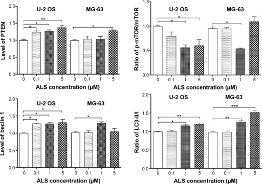 ALS regulates the expression of key pro- and anti-autophagic proteins in U-2 OS and MG-63 cells.Notes: U-2 OS and MG-63 cells were treated with ALS at 0.1, 1, and 5 μM for 24 hours and then subjected to Western blotting assay. (A) Representative blots of the phosphorylated PI3K, AMPK, p38 MAPK, Akt, and mTOR and the total protein levels of PI3K, AMPK, p38 MAPK, Akt, mTOR, PTEN, beclin 1, LC3-I, and LC3-II in U-2 OS and MG-63 cells and (B) the ratio of p-PI3K/PI3K, p-AMPK/AMPK, p-p38 MAPK/p38 MAPK, p-Akt/Akt, p-mTOR/mTOR, and LC3-II/I and the expression levels of PTEN and beclin 1 in U-2 OS and MG-63 cells. β-actin was used as the internal control. Data are the mean ± SD of three independent experiments. *P<0.05; **P<0.01; and ***P<0.001 by one-way ANOVA.Abbreviations: ALS, alisertib; SD, standard deviation; ANOVA, analysis of variance; PI3K, phosphatidylinositol 3-kinase; AMPK, AMP-activated protein kinase; MAPK, mitogen-activated protein kinase; Akt, protein kinase B; mTOR, mammalian target of rapamycin; PTEN, phosphatase and tensin homolog; LC3, microtubule-associated protein 1A/1B-light chain 3; OS, osteosarcoma.