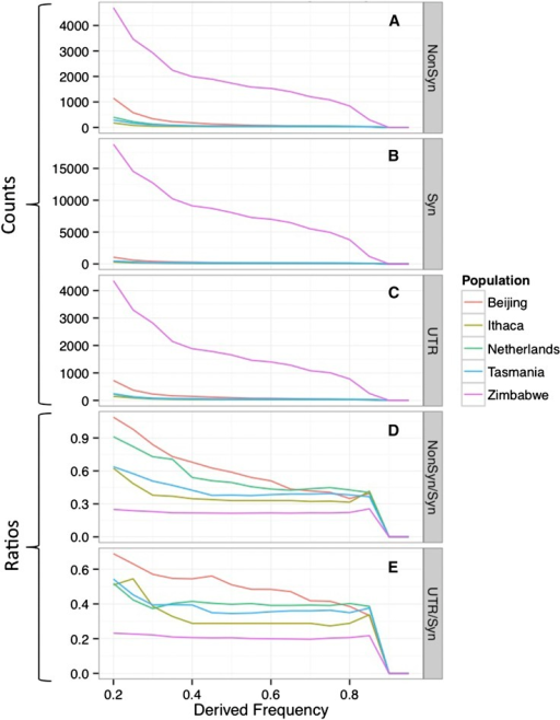 Summary of the Number of Potentially Functional Population-specific single-nucleotide polymorphisms. High-frequency derived allele counts for genic (A and B) and UTR regions (C) at frequencies between 20% and 100% are plotted for five populations. All sites in the plot are based on the IBD and callability-masked SNP dataset, have <20% missing data, and carry ≥70% posterior probability for their ancestral state. Panels (D) and (E) attempt to normalize the nonsynonymous and untranslated region (UTR) counts by showing the ratio to the putatively more neutral synonymous counts. IBD, identity by descent.
