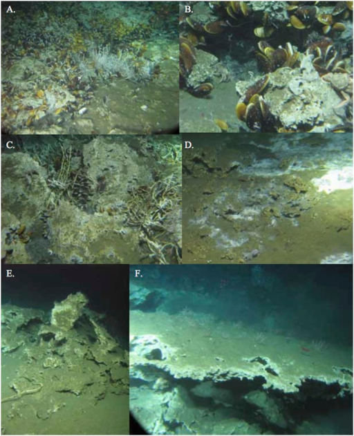 Carbonates formations in different habitats on the Costa Rica Margin.Active seepage: A. Mussel bed and tubeworm habitat; B. Mussel Bed; C. Tubeworm habitat; D. Bacterial mat; Inactive Sites E, F.