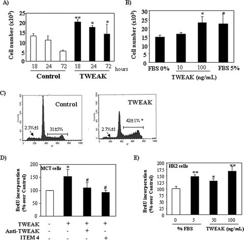 TWEAK increases cell proliferation in cultured murine (A–D) and human (E) renal tubular cells. (A) and (B) Quantification by flow cytometry of tubular cell number following treatment with TWEAK: (A) Time–response to 100 ng/ml TWEAK in serum-deprived cells, **P < 0.005 versus its corresponding control; *P < 0.05 versus control. Mean (±S.E.M.) of four independent experiments. (B) Dose–response at 18 hrs, *P < 0.02 versus 0% FBS. Mean (±S.E.M.) of four independent experiments. Cells cultured in 5% FBS medium were used as positive controls. (C) Treatment with 100 ng/ml TWEAK for 18 hrs induced cell proliferation (flow cytometry of DNA content). Note the increased proportion of cells in the S and M phase of the cell cycle (/––––/), without changes in the apoptotic rate (arrow). Mean (±S.E.M.) of four experiments, *P < 0.002 versus control. (D) ITEM-4, a neutralizing anti-Fn14 antibody and an anti-TWEAK antibody prevented proliferation induced by 100 ng/ml TWEAK at 18 hrs, as assessed by BrdU incorporation. Mean (±S.E.M.) of four independent experiments. *P < 0.005 versus control; #P < 0.003 versus TWEAK alone. (E) TWEAK-induced proliferation in human HK2 tubular cells as assessed by BrdU incorporation dose–response at 18 hrs, *P < 0.02 versus 0% FBS. **P < 0.001 versus 0% FBS. Mean (±S.E.M.) of four independent experiments. Cells cultured in 5% FBS medium were used as positive controls.