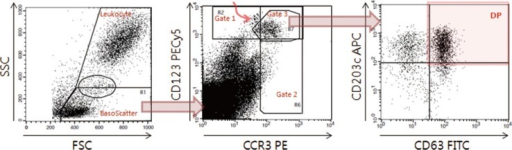 Data acquisition and analysis of indirect flow BAT for autoimmune urticaria diagnosis. On the FSC/SSC plot (left), the basophil scatter gate (BasoScatter) and leukocyte gate are defined to calculate the basophil percentage among total leukocytes. On the CCR3/CD123 plot (middle), three basophil gates, gates 1, 2, and 3, are defined. The upper left subset, indicated by a curved red arrow within gate 1 and just outside gate 3, appears to be monocyte doublets, an assumption based on their back-gated location on the FSC/SSC plot. On the CD63/CD203c plot (right), a quadrant is set to obtain the expression percentage of CD203c (two upper quadrants), DP (red-shaded quadrant, CD203c+CD63+), or CD63 (two right quadrants).Abbreviations: FITC, fluorescein isothiocyanate; PE, phycoerythrin; PECy5, PE-cyanine 5; APC, allophycocyanine; FSC, forward scatter; SSC, side scatter; DP, double positivity; CCR3, eotaxin CC chemokine receptor-3.