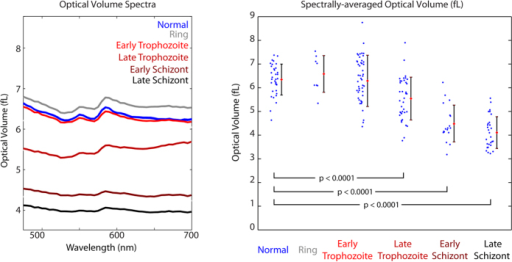 (a) Stage-separated OV spectra. (b) Spectrally-averaged OV across cell groups examined in this study. Cells infected by ring-stage and early trophozoite parasites show no significant OV changes. Late Trophozoite, Early Schizont, and Late Schizont infected RBCs show a progressive decrease in OV with highly statistically significant differences compared to uninfected and ring stage.