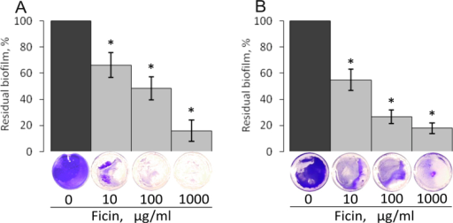 The biofilm disruption by Ficin.S. aureus (A) and S. epidermidis (B) were grown in BM broth for 72 h to form a rigid biofilm, the mature biofilms were gently washed by BM and a fresh BM broth was loaded. Ficin was added until final concentrations of 10, 100 or 1000 μg/ml and incubation was followed for 24 h. The residual biofilms were quantified by crystal-violet staining.