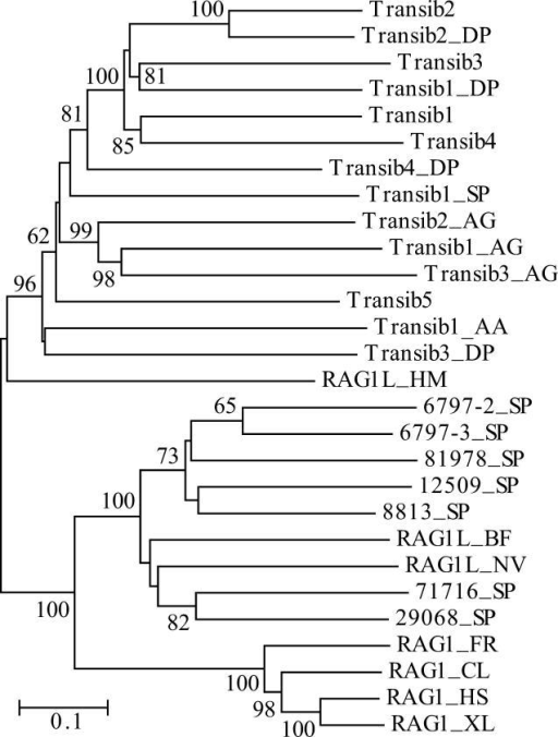 Diversity of the Transib TPases and RAG1 Core–Like Proteins in AnimalsThe phylogenetic tree was obtained by using the neighbor-joining algorithm implemented in MEGA [44]. Evolutionary distance for each pair of protein sequences was measured as the proportion of aa sites at which the two sequences were different. Its scale is shown by the horizontal bar. Bootstrap values higher than 60% are reported at the corresponding nodes. Species abbreviations are as follows: AA, yellow fever mosquito; AG, African malaria mosquito; BF, lancelet; CL, bull shark; DP, D. pseudoobscura fruit fly; FR, fugu fish; HM, hydra; HS, human; NV, starlet sea anemone; SP, sea urchin; XL, frog. (Transib1 through Transib5 are from D. melanogaster fruit fly).