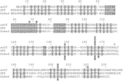 Sequence alignment of asCP, GFP, and DsRed proteins. The numbering is based on GFP. Introduced gaps are represented by dashes. The residues whose side chains form the interior of the β-can are shaded. Mutations introduced in asCP and DsRed are designated under and below their sequences, respectively.