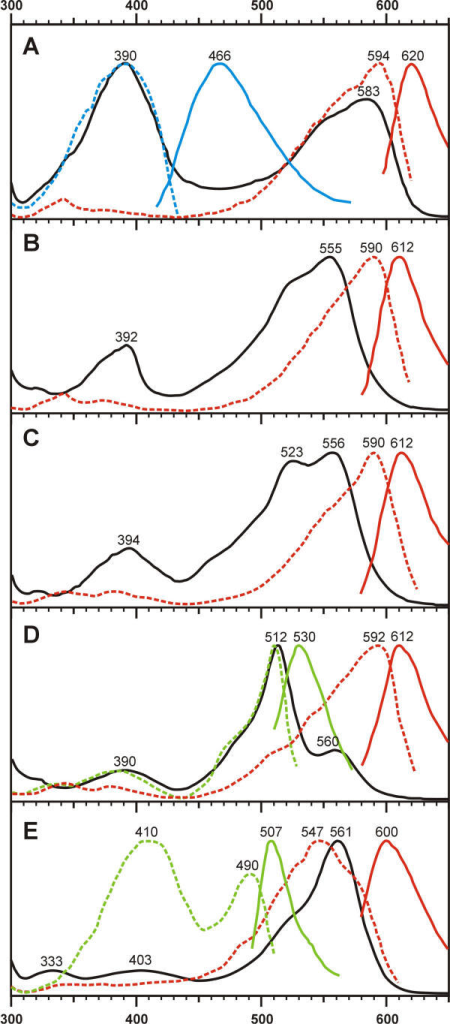 Normalized spectra for selected mutants of asCP and DsRed. Absorption (black solid lines), excitation (colored dashed lines), and emission (colored solid lines) spectra are shown for each mutant. Blue, green, or red excitation-emission lines correspond to color of fluorescence. (A) asCP-S165V. Blue fluorescence is about tenfold weaker than red. (B) asCP-S165A. (C) asCP-S165C. (D) asCP-S165T. Green emision is about twofold stronger than red. (E) DsRed-NF. Green emission peak is about threefold lower than red one.