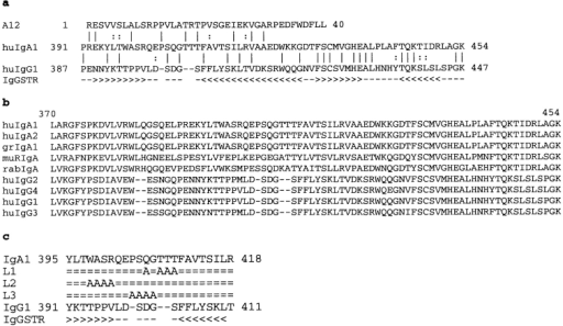 Comparison of IgG1 and IgA1 CH3 sequences and IgG1  structure in the area homologous to several phage-derived peptides. (a) The  A12 peptide alignment with human IgA1 and IgG1. IgGSTR indicates structural features of IgG1 where < denotes a β-strand running in a descending  orientation (i.e., hinge to CH3 direction), > denotes a β-strand running in  an ascending direction (i.e., CH3 to hinge direction), and – denotes a loop or  open structure (29). (b) Comparison of several mammalian IgA sequences  with the four human IgG subclasses showing the additional IgA-specific  amino acids present in the loop at positions 402–410 in the IgA sequence.  hu, human; gr, gorilla; mur, murine; rab, rabbit. (c) IgA1 Cα3 mutants L1,  L2, and L3 aligned with the Cα3 and Cγ3 wild-type sequences and Cγ3  structure (IgGSTR). = denotes sequence identity in the mutants, – denotes  a space introduced in the IgG sequence to maximize homology, and  IgGSTR is labeled according to panel a. Numbering of IgA1 and IgG1 is  according to references 5 and 29, respectively.