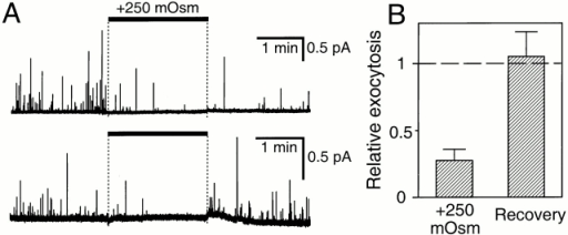 Depression of exocytosis by hyperosmotic solution. (A) Amperometric recordings from two cells loaded with dopamine. Cells were treated with external saline solution supplemented with 250 mOsm sucrose for 2 min (bar). (B) Summary of results of 12 experiments normalized to the initial control period.