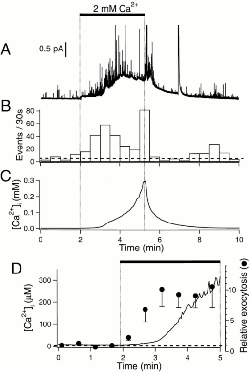 Stimulation of exocytosis by Ca2+ entry. (A) Amperometric record. Dopamine-loaded cells were treated with 5 μM ionomycin in Ca2+-free external saline solution containing 100 μM EGTA for >6 min before the recording. External solution containing 2 mM Ca2+ was applied as indicated by the bar. Ionomycin was present throughout the recording. The large deflection near 7 min may represent breakdown of a nearby cell releasing a large quantity of dopamine into the medium. (B) Rate of exocytosis for the recording in A. The horizontal broken line indicates average rate of exocytosis in the control period. (C) Simultaneous Ca2+ measurement from the same cell using a low-affinity Ca2+ dye, mag-indo 1-AM. (D) Averaged kinetics of Ca2+ rise and exocytosis for many cells. [Ca2+]i (n = 8, line) and relative rate of exocytosis (n = 16, •) measured as 2 mM Ca2+ was applied to cells (horizontal bar). Basal [Ca2+]i and the normalized rate of exocytosis (1.0) in the control period are indicated by a horizontal broken line. Error bars are shown only in the downward direction.