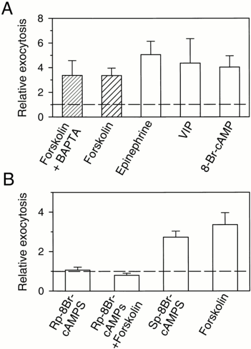 Regulation of exocytosis by cAMP and PKA. (A) Stimulation by different agents known to raise intracellular cAMP. Cells were treated with forskolin (20 μM), epinephrine (1 μM), VIP (1 μM), or 8-Br-cAMP (1 mM) for 3 min. Relative exocytosis is the ratio of exocytosis after and before the treatment. One group of cells (Forskolin + BAPTA) was pretreated with 50 μM BAPTA-AM for 1 h. (B) Evidence that PKA is needed. After the rate of exocytosis was measured in control saline solution, the PKA-specific inhibitor, Rp-8-Br-cAMPS, was applied to the bath for 5 min at an estimated final concentration of 2 mM. The rate of exocytosis in Rp-8Br-cAMPS was measured during the last 2 min of application of the inhibitor. Then, forskolin (∼20 μM) was added to the bath (Rp-8Br-cAMPS + Forskolin). In both cases, the rate of exocytosis was compared with that in control condition. With other sets of cells, the PKA-specific activator, Sp-8-Br-cAMPS, was applied to bath (Sp-8Br-cAMPS, ∼2 mM). The value for forskolin alone is same as in A. Cells were loaded with either dopamine or serotonin.