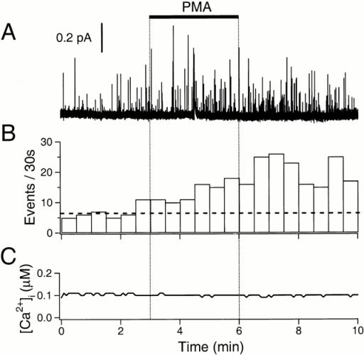 Stimulation of exocytosis by PMA. (A) Amperometric record. The cell was preincubated in 50 μM BAPTA-AM for 1 h, and then loaded with dopamine and indo 1-AM. PMA (100 nM) was applied for 3 min as indicated by the bar. (B) The rate of exocytosis for the same cell. The horizontal broken line indicates the average rate of exocytosis in the control period. (C) Simultaneous Ca2+ measurement using indo-1 dye in the same cell.