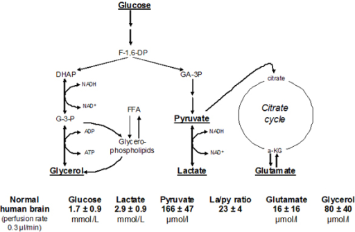Glycolytic chain intermediary metabolism glycerol and open i glycolytic chain intermediary metabolism glycerol and glycerophospholipid formation and the citric acid cycle simplified ccuart Gallery