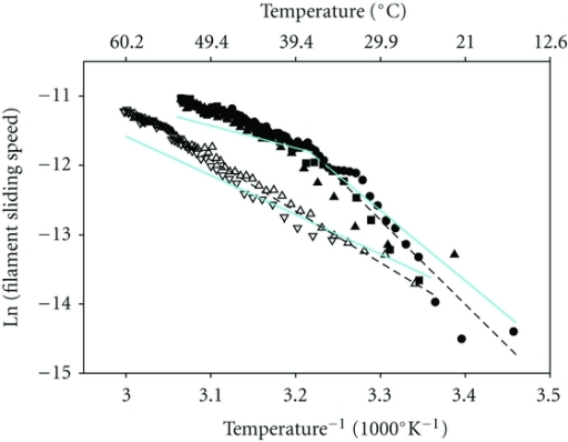Correction for temperature-dependent effects of solvent viscosity (solid, cyan lines) on filament sliding speed of regulated thin filaments (solid symbols) and unregulated F-actin (open symbols). Data from Figure 1(c) were replotted in Arrhenius form (symbols as in Figure 1), with data omitted for regulated thin filaments above ∼54°C and filament sliding speeds expressed in μm s−1. Dashed lines (black) are linear least squares regressions on the data before correction for temperature-dependent changes in solvent viscosity. Note the change in slope at ∼38°C (Tt) for regulated thin filaments. Effects of temperature-dependent changes in solvent viscosity (normalized to that at body temperature, 37°C) were removed by assuming that speed varies inversely with viscosity, as demonstrated experimentally [43]; the net result of this correction in all instances is a decrease in apparent Ea.
