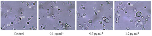 Morphological changes of hemocytes of Spodoptera litura after continuously fed with 0.1, 0.5, and 1.2 µg mL-1 hexaflumuron—dipped cabbage leaves for 96 hours (25Ox). High quality figures are available online.