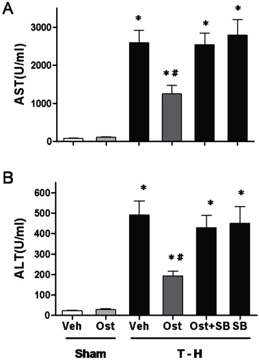 Effect of osthole treatment on plasma AST (A) and ALT (B) in rats at 24 hours after sham operation (Sham) or trauma-hemorrhage and resuscitation (T-H).Animals were treated with either vehicle (Veh), osthole (Ost), osthole in combination with SB-203580 (Ost+SB) or SB-203580 (SB). Data are shown as mean ± SEM of 8 rats in each group. *p<0.05 compared to Sham; #p<0.05 compared to T-H+Veh, T-H+Ost+SB and T-H+SB.