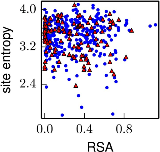 The inherent mutational tolerance of NP's CTL epitopes is indistinguishable from that of non-epitope sites in NP.The plot shows the site entropy vs relative solvent accessibility (RSA) of NP residues that participate in multiple CTL epitopes (red triangles) and all other NP residues in the crystal structure (blue circles). Visual inspection suggests that the epitope sites have mutational tolerance comparable to other sites, and this result is supported by the statistical analysis in Table 5. Note that unlike for HA, there is no trend for RSA to correlate with site entropy—this could be because many of NP's surface-exposed sites are constrained by interactions with viral RNA. The CTL epitopes are those delineated in the first supplementary table of Gong and Bloom (2014). The site entropies are computed from a previously described deep mutational scan of NP, and are the values in the first supplementary file of Bloom (2014); the RSA values are also taken from that reference. The data and code used to generate this plot is available via http://jbloom.github.io/mapmuts/example_WSN_HA_2014Analysis.html; the plot itself is the file NP_CTL_entropy_rsa_correlation.pdf described therein.DOI:http://dx.doi.org/10.7554/eLife.03300.023