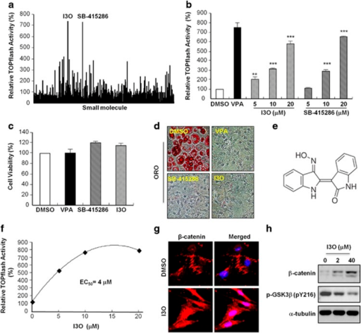 Screening a chemical library to identify a small molecule activator of the Wnt/β-catenin signaling pathway. (a) TOPflash reporter activity of HEK293-TOP cells treated with individual small molecules in DMEM at a concentration of 20 μM. After 24 h firefly luciferase activities of whole-cell lysates were measured. (b) Dose-dependency of I3O and SB-415286 on the activation of Wnt/β-catenin pathway in HEK293-TOP cells. VPA (500 μM) was used as a positive control (black colored bar). (c) Cell viability of HEK293-TOP cells was measured after treatment with either DMSO, I3O, or SB-415286 at a concentration of 20 μM. (d) ORO staining of 3T3-L1 preadipocytes that were induced to differentiate using MDI and treated with either DMSO, I3O or SB-415286 at a concentration of 20 μM. (e) Chemical structure of I3O. (f) Activation curve for TOPflash reporter activity induced by I3O. (g) 3T3-L1 preadipocytes were treated with 20 μM of I3O and immunocytochemical analysis was performed to detect β-catenin (red). Nuclei were counterstained with DAPI (blue). (h) 3T3-L1 preadipocytes were treated with 0, 2 and 40 μM of I3O, and immunoblotting analysis was performed to detect β-catenin, p-GSK3b (pY216) and α-tubulin. Values are mean±standard error of the mean (s.e.m., n=3). **P<0.01, ***P<0.001 (Student's t-test).