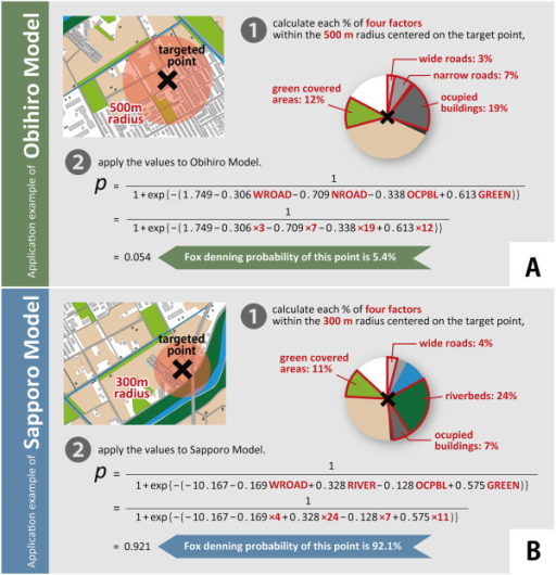 Application examples of the established models for the two cities. Panel A shows an application example of Obihiro model. If you want to know the probability of fox denning at a targeted point in the urban area of Obihiro City, 1) calculate each percentage of wide roads, narrow roads, occupied buildings, and green covered areas within the 500 m radius centered on the point, 2) apply the values to the model, and then, you can get the answer of 5.4% of probability. Panel B shows an application example of Sapporo model. If you want to know the probability of fox denning at a targeted point in the urban area of Sapporo City, 1) calculate each percentage of wide roads, occupied buildings, riverbeds, and green covered areas within the 300 m radius centered on the point, 2) apply the values to the model, and then, you can get the answer of 92.1% of probability.