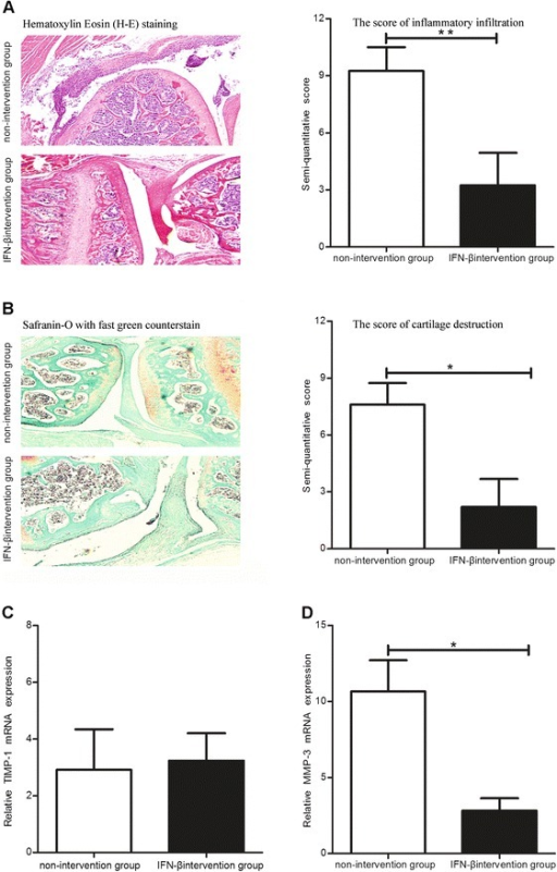 Effects of exogenous IFN-β treatment on the inflammation and cartilage destruction in CAIA model mice. The inflammatory cellular infiltration score (A), cartilage injury (B), and the levels of MMP-3 (C) and TIMP-1 (D) in the IFN-β intervention and non-intervention groups *: P <0.05.