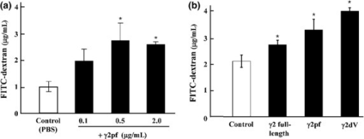 Effect of laminin γ2 (Lmγ2) chain on endothelial permeability in vitro. (a) Dose-dependent effect of γ2 proteolytic fragment (γ2pf) on the permeability of a HUVEC monolayer using FITC-dextran. Each point represents the mean ± SD (bar) of triplicate chambers. *P < 0.05. (b) Effects of three kinds of Lmγ2 proteins on the permeability of a HUVEC monolayer. Cells were stimulated with PBS (Control), full-length γ2 chain (1.5 μg/mL), γ2pf (0.5 μg/mL), or γ2 N-terminal domain V (γ2dV; 0.2 μg/mL) for 18 h, and the permeability was determined as above.
