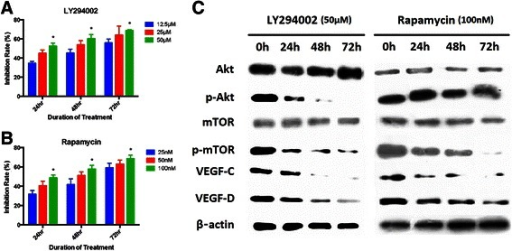 Inhibition of p-Akt and p-mTOR in SGC-7901 cells by LY294002 and Rapamycin. A: SGC-7901 cell growth with intervention of different time points and dosages of LY294002, B: SGC-7901 cell growth with intervention of different time points and dosages of Rapamycin, C: Effect of LY294002 (50 μM) and Rapamycin (100 nM) on Akt/mTOR pathway and VEGF-C/-D by Western blot.