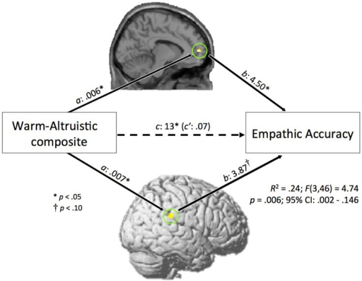 Overall model for mediation analysis.The association between warm- altruistic composite scores and empathic accuracy is mediated by activity within the medial prefrontal cortex (PFC) and temporoparietal junction (TPJ).