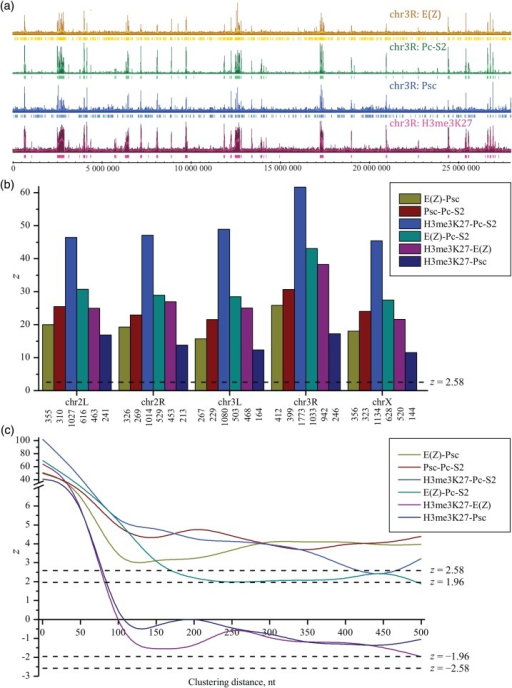 (a) The binding profiles for proteins E(Z), Pc-S2, and Psc, and for H3me3K27 histone marks over chromosome 3R of Drosophila melanogaster. For the study of correlations, these profiles were preliminary filtered by the cut-off threshold mean + 2 SD and clustered with distance of 50 nt [Preprocessing of input genetic data and Equation (12)]. The input data after preprocessing are shown below initial profiles. (b) z-ratios [Equation (23)] characterizing pairwise positional correlations between profiles for proteins E(Z), Pc-S2, and Psc, and for the H3me3K27 mark in the different chromosomes of D. melanogaster. The input data were preprocessed as described above. The numbers below the chromosome nomenclature correspond to that of the nearest neighbours. The horizontal broken lines for z-ratios correspond to 5% (/z/ = 1.96) and 1% (/z/ = 2.58) significance thresholds for random correlations. (c) Ratios characterizing positional correlations between profiles for proteins E(Z), Pc-S2, and Psc, and for H3me3K27 histone marks in the chromosome 2R of D. melanogaster at the different clustering lengths. The profiles were preliminary filtered by the cut-off threshold mean + 2 SD. The positive values of zcorr reflect a trend towards shorter distances between profiles relative to the reference model (or correlations), whereas the negative values of zcorr reflect a trend towards longer distances between profiles (or anticorrelations).