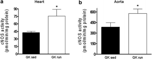 The constitutive nitric oxide synthase (cNOS) activities (expressed in pmol/min/mg protein) in the a heart and b aorta of GK rats at the end of the 6-week exercise or sedentary period. Data are mean ± SEM. Statistical significance: *p < 0.05 relative to the GK sed group. GK sed sedentary Goto-Kakizaki rats, GK run voluntary wheel-running Goto-Kakizaki rats